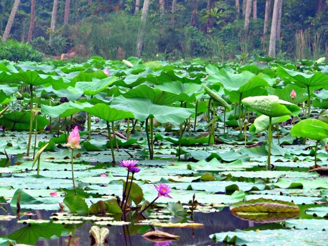 lotusgarden singapore pulau ubin